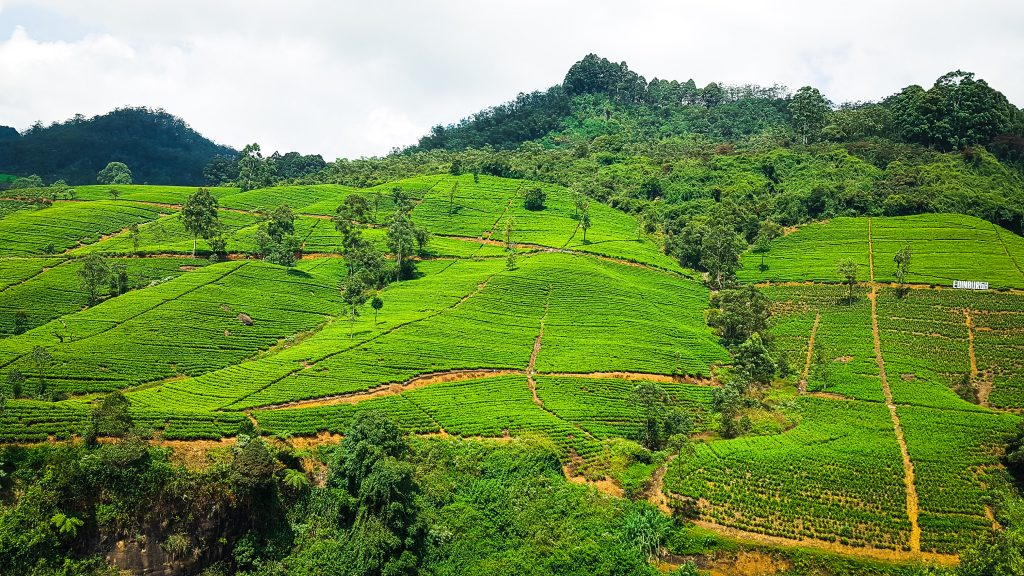 Top atracții în Sri Lanka